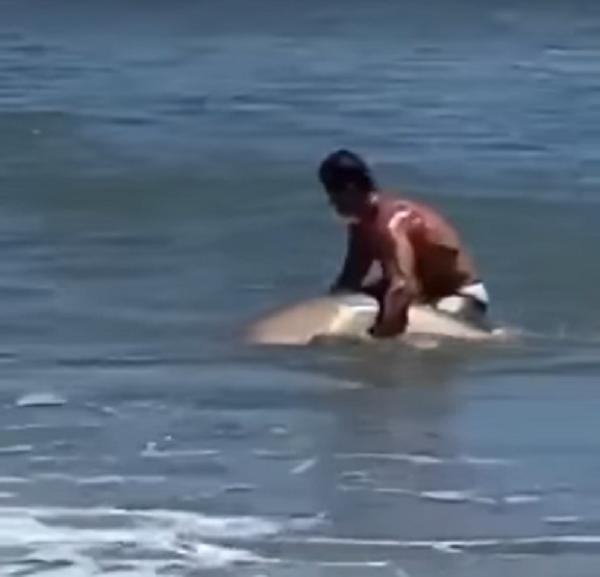 shark swimmer