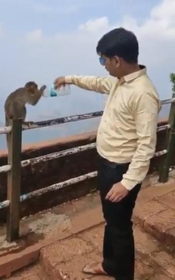 thirsty monkey