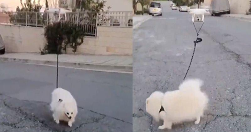 genius man lets drone take his dog for a walk during covid