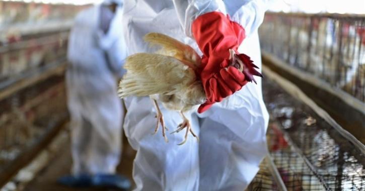 bird flu kerala