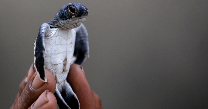 China Turtle Trade