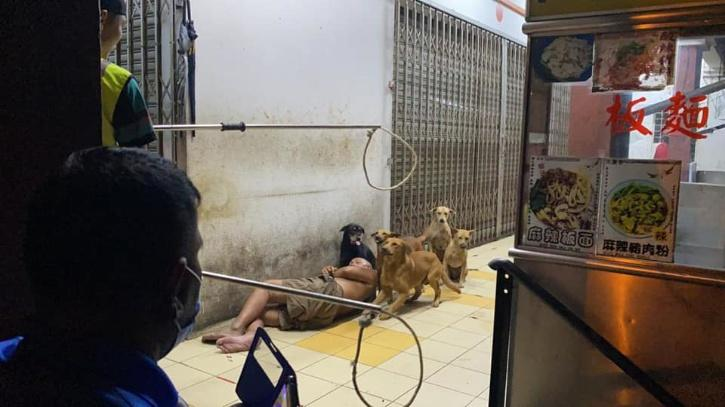 Dogs protect man and make a circle around him even as dog-catchers try to catch them