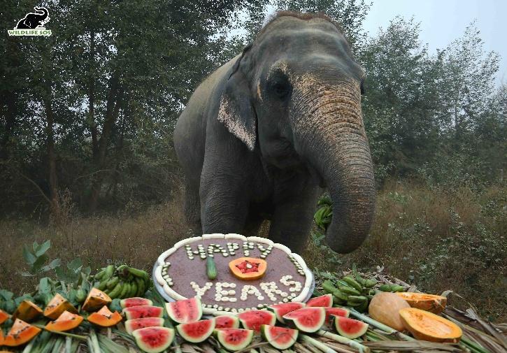 Elephant Rescue, Wildlife SOS, Wildlife SOS Elephant, Begging Elephant, Wildlife SOS Hospital, Circus Elephant