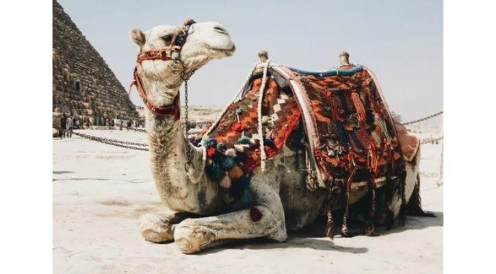 MIT material camel