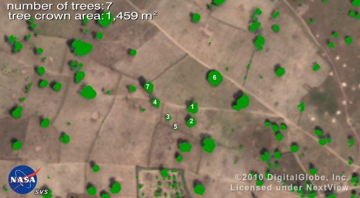sahara desert tree mapping