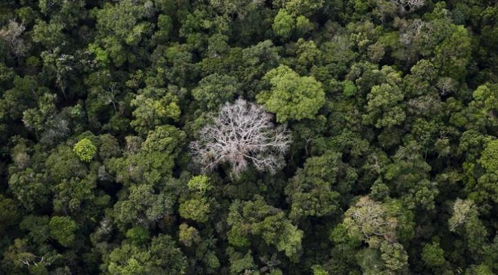 google tree canopy AI