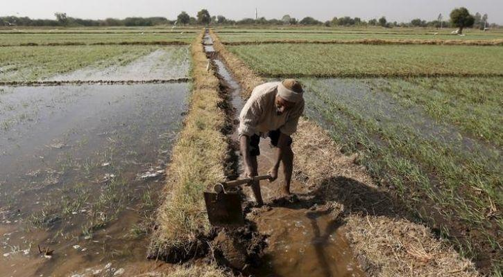 lonely farmer in india