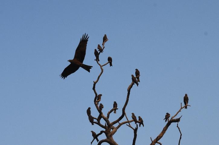 Aman Sharma, Aman Sharma Activist, Aman Sharma Delhi, Aman Sharma Bird Watching, Birds in Delhi