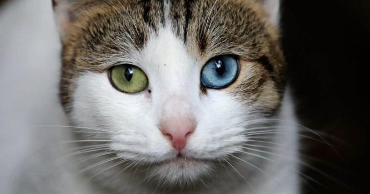 meowtalk app cat conversation