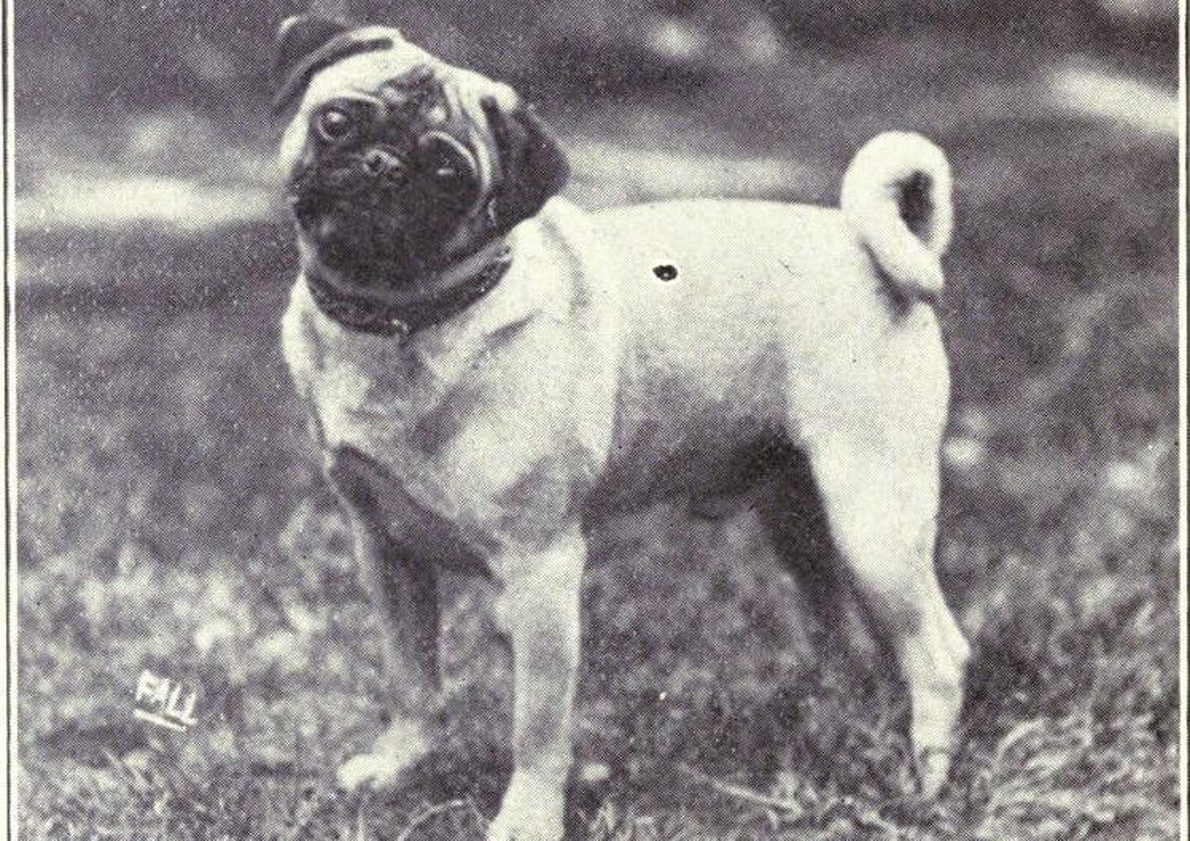 Pug Then & Now