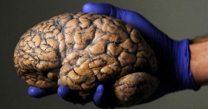 brain teleportation research