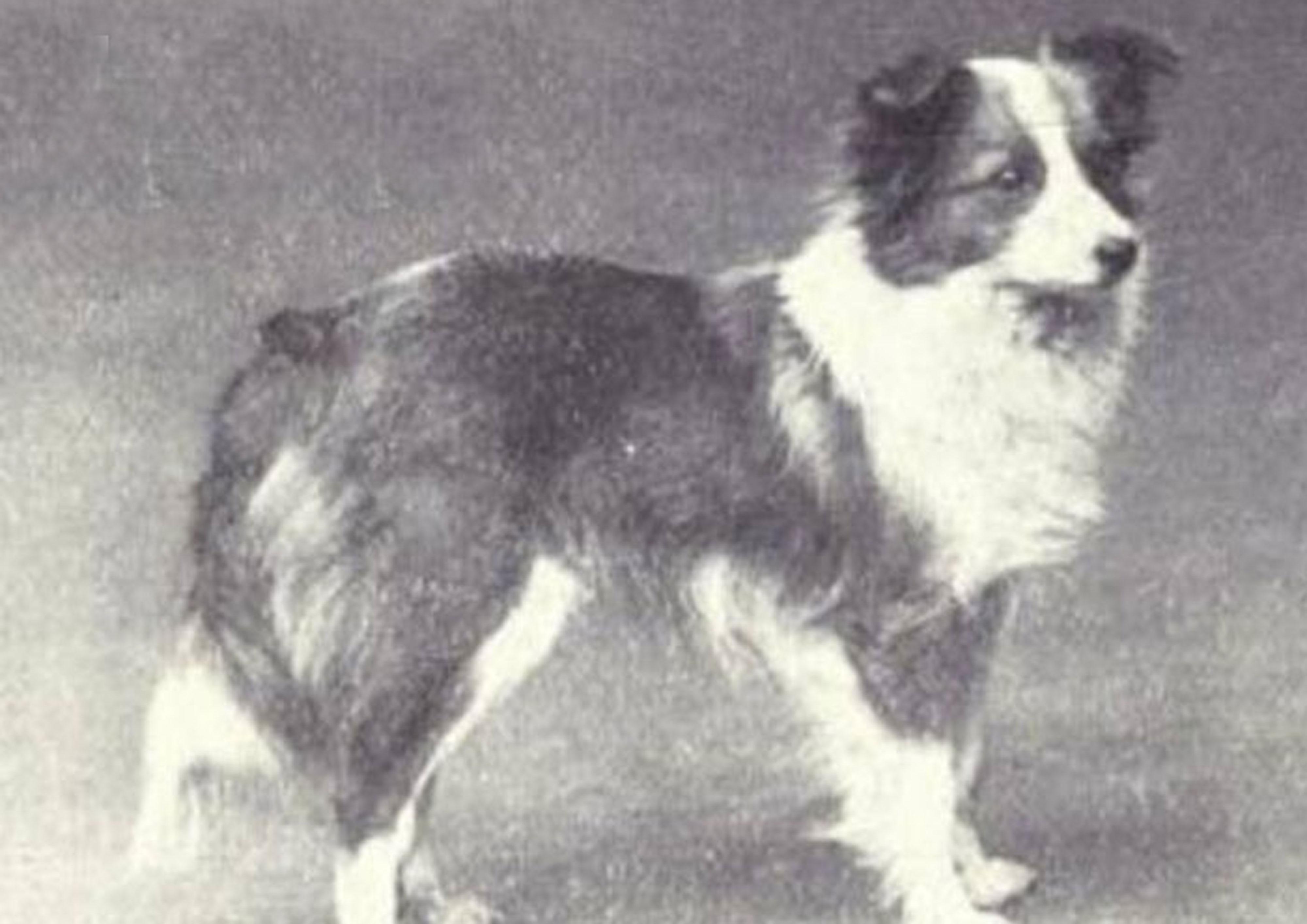 Shetland Sheepdog Then & Now