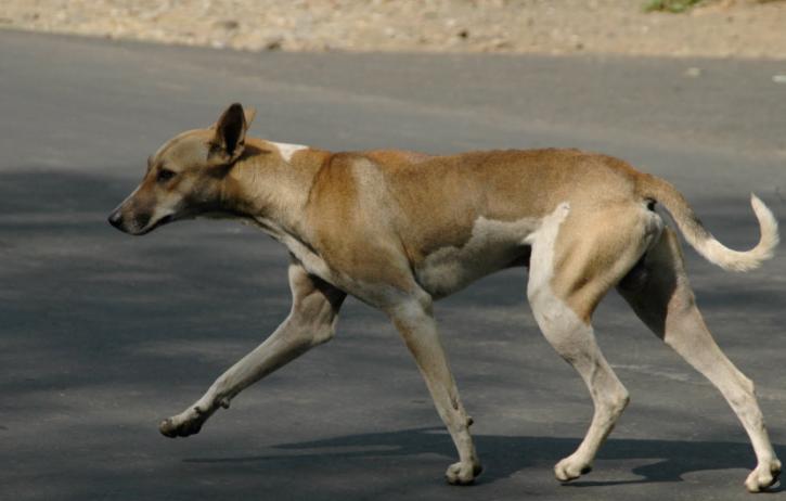 Stray dog raped in Mumbai