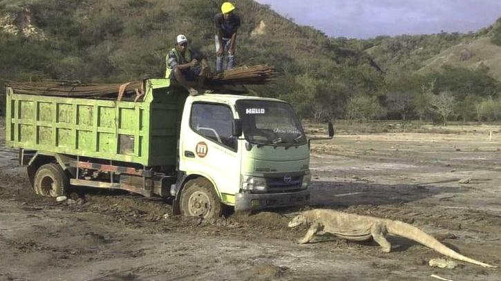 Komodo Dragon Truck Photo