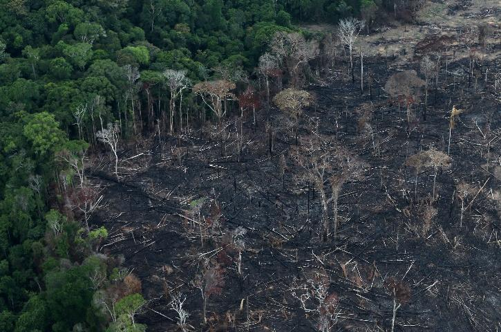 brazil deforestation amazon
