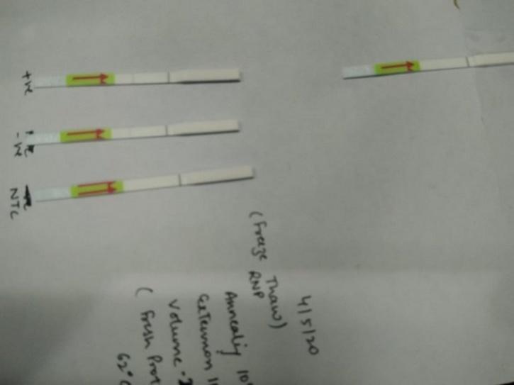 Feluda Paper-Strip COVID-19 Test Kit, Feluda Test Kit, Feluda COVID-19 Test, Feluda Test Kit COVID-19, COVID-19 Test Delhi