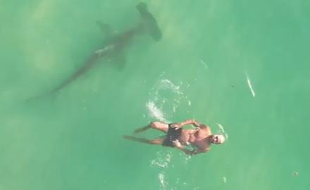 Man Swims Next To 10-Foot Hammerhead Shark