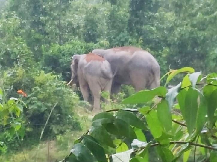 Wild Elephant, Electrocution, Jabalpur, Elephant Death, Wild Elephant Death India