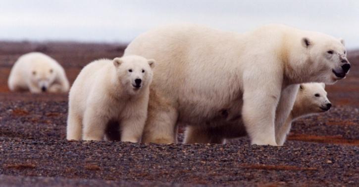 climate change wildlife diseases