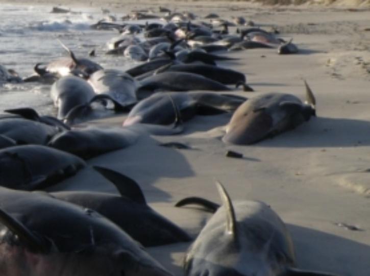 whales-stranding-5fbe15c0bd7ed