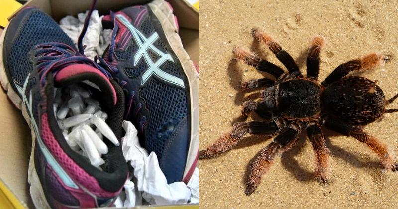 119 Tarantulas Smuggled Inside Running Shoes