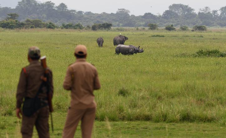 Kaziranga Rhino Poaching