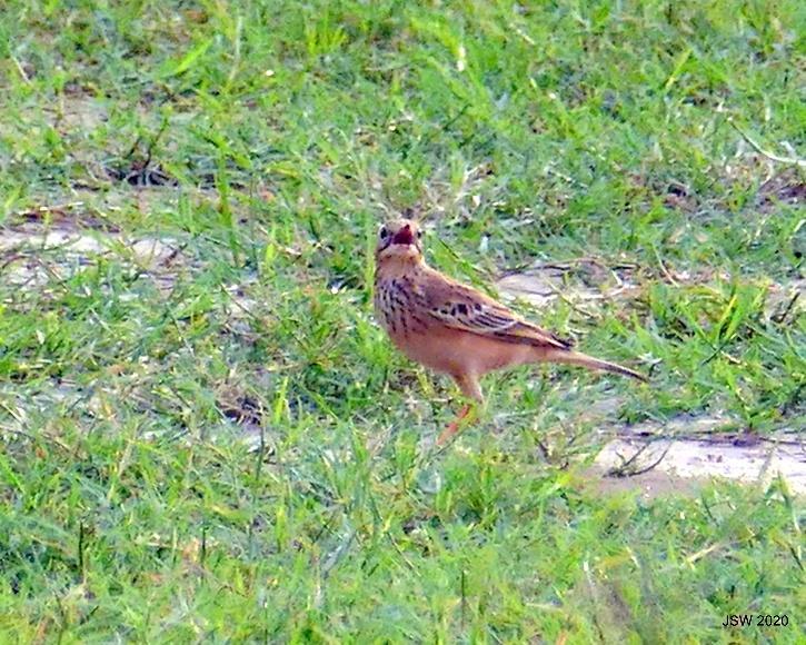 Delhi Winters, 120 Species Of Migratory Birds, Migratory Birds India, Birds Migration, Migratory Birds Delhi, Najafgarh lake