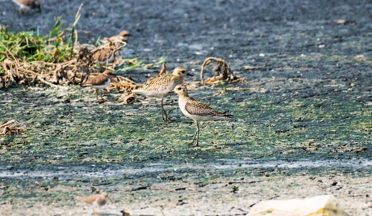 Migratory Birds Delhi