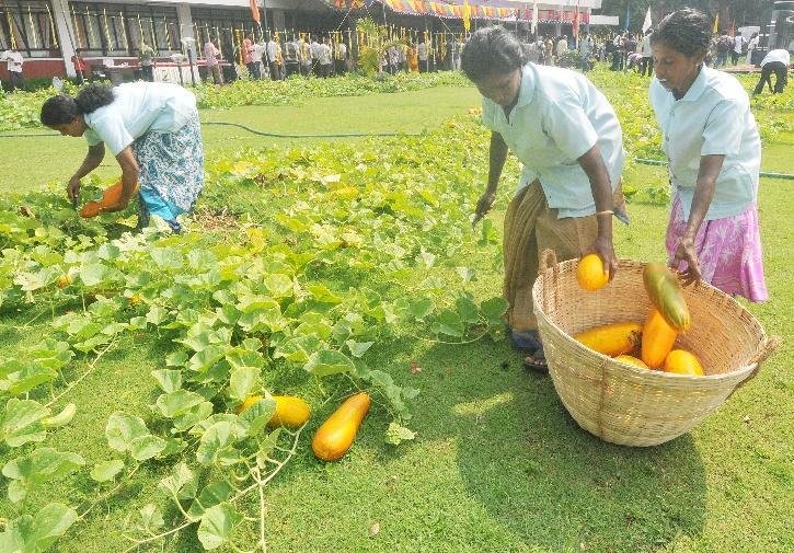 Kerala Minimum Support Price