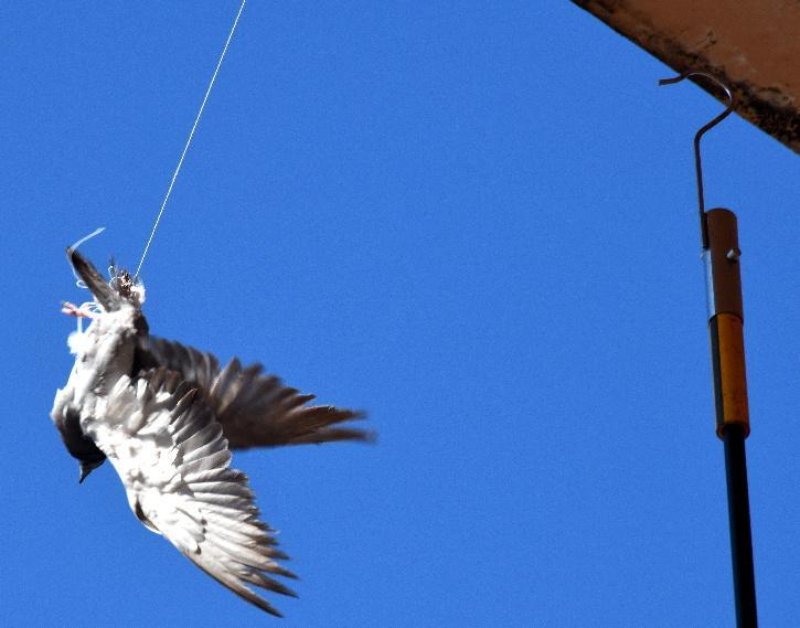 Kite Flying Birds