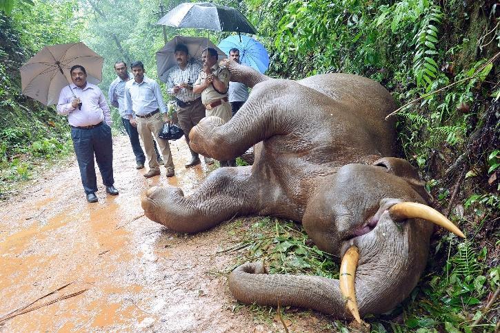 Elephant Deaths, Karnataka Elephant Deaths, Electrocution Of Elephants, Elephants died of Electrocution India, Elephant Deaths India
