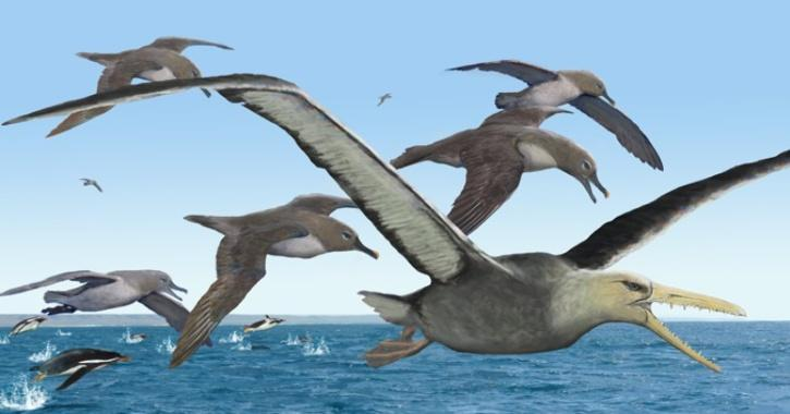 earth's largest flying birds in history