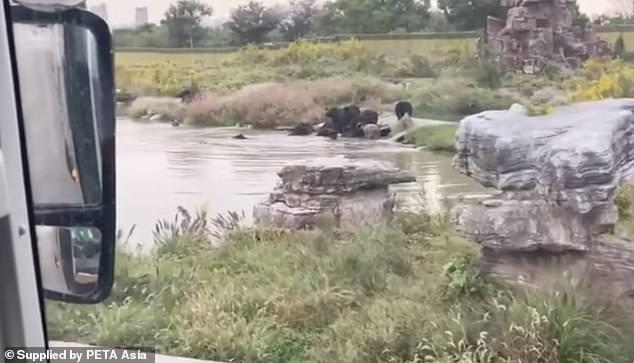 A busload of visitors to a Chinese wildlife park have watched on in horror as a zookeeper was fatally mauled