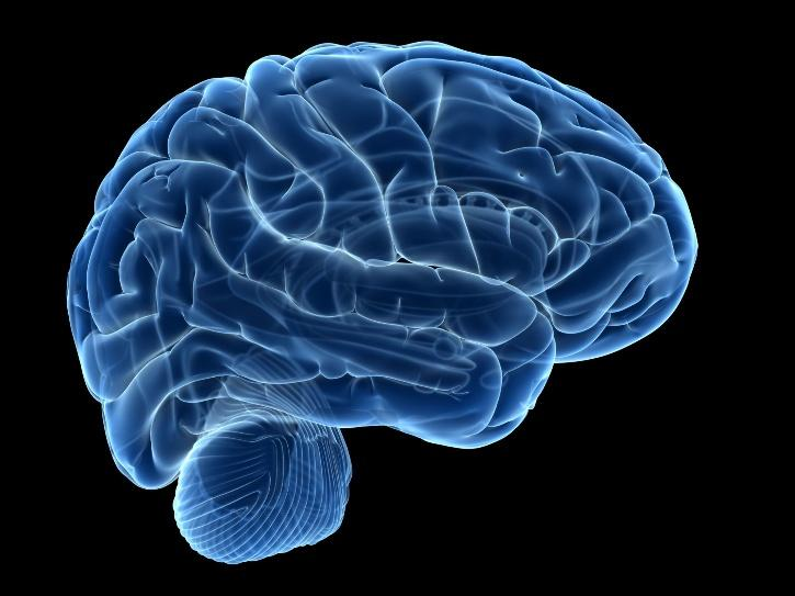 At the age of 35, the brain is at its most powerful say Ludwig Maximilian University of Munich researchers