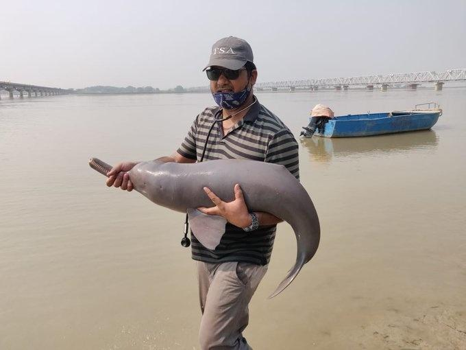 An elusive Ganges river dolphin was rescued in Uttar Pradesh