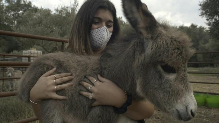 The donkeys helping Spanish medics cope with the pandemic
