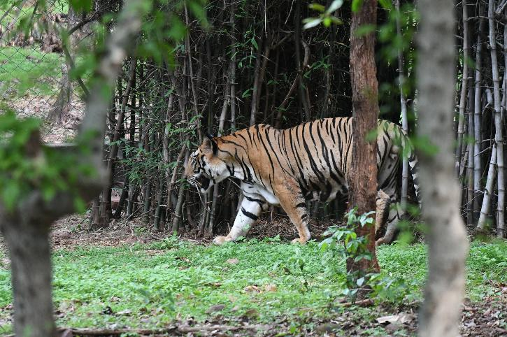 Beef Ban For Assam Zoo Animals