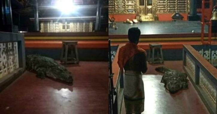 Babiya, the crocodile, inside the temple