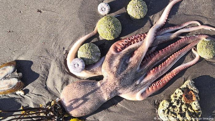 mass death of sea creatures in Russia