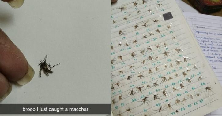 The picture on the left shows a single dead mosquito