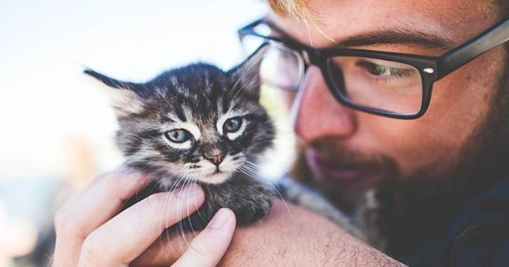 cat human behavior study