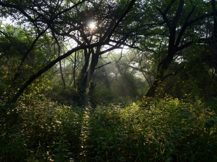 India Forest, India Forest Cover, India  Deforested Land, India  Land-Degradation Neutrality, Prakash Javadekar