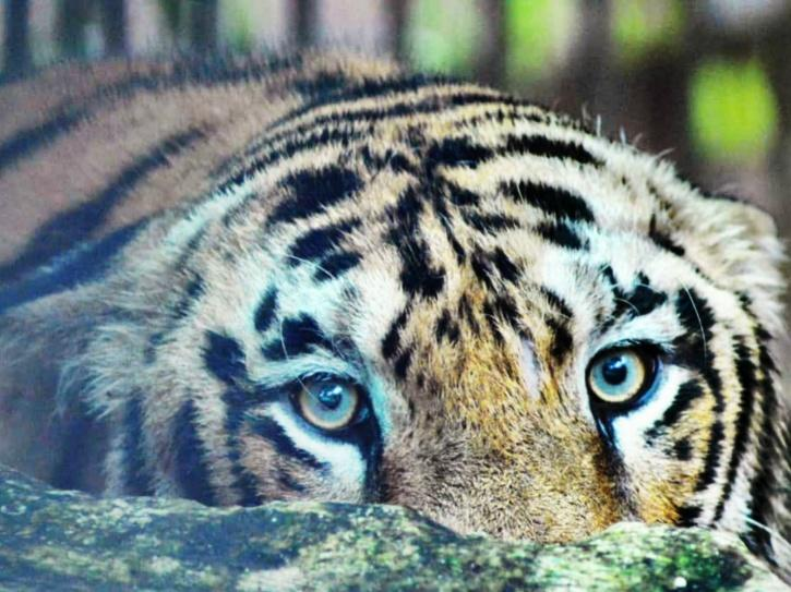 Zoo animals Assam