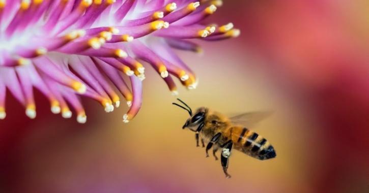 france bee harming pesticide ban