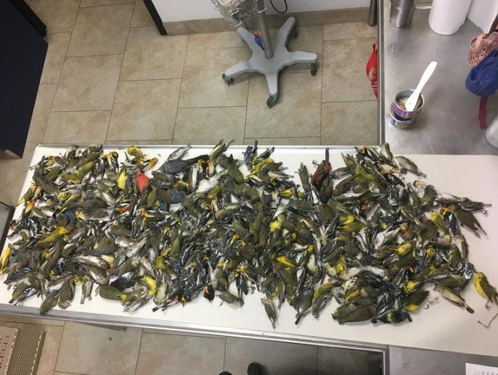 Birds dead after collision with skyscrapers