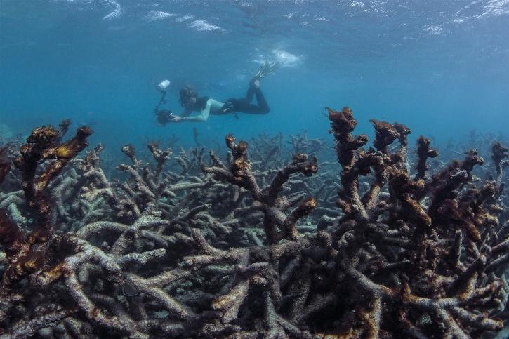 Dead coral resulting from coral bleaching