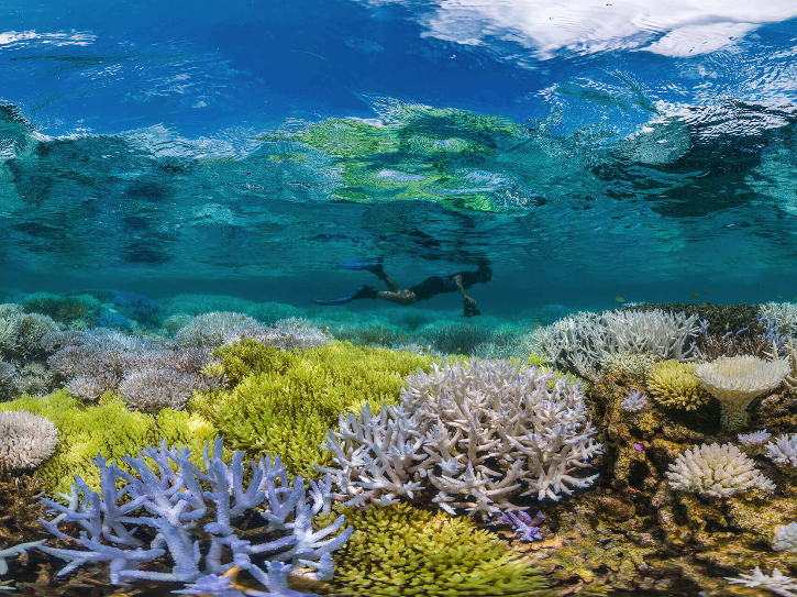 Climate crisis is causing an increase in the frequency of reef disturbances