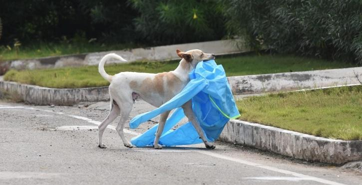 Dog carrying ppe kit