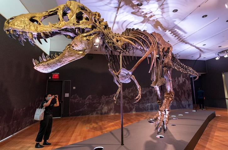 Trex skeleton sold for almost $32 million
