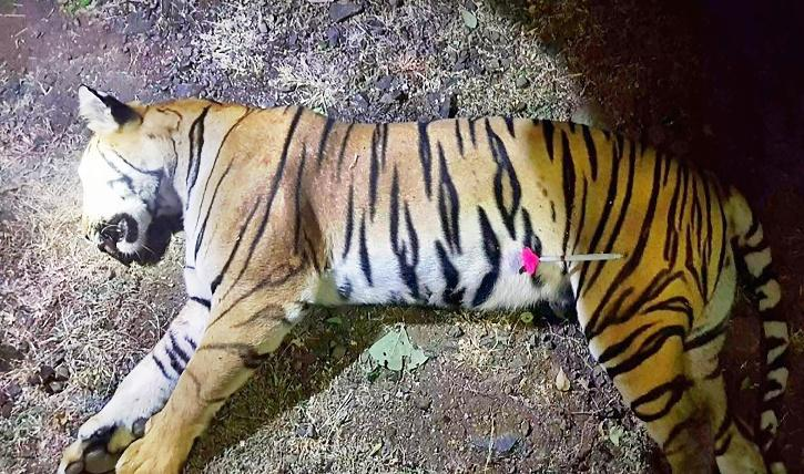 Tiger carcass found in UP